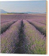 English Lavender Field, Valensole, Valensole Plateau, Alpes-de-haute-provence, Provence-alpes-cote D Azur, France Wood Print