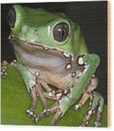 Giant Monkey Frog Wood Print