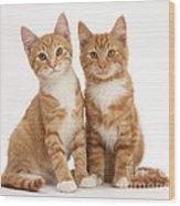 Ginger Kittens Wood Print