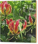 Gloriosa Named Rothschildiana Wood Print