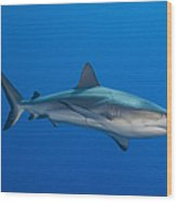 Gray Reef Shark, Kimbe Bay, Papua New Wood Print by Steve Jones