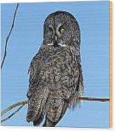 Great Gray Owl Wood Print