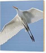 Great White Egret In Flight Wood Print