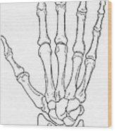 Hand And Wrist Bones Wood Print