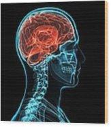 Head Anatomy, Artwork Wood Print