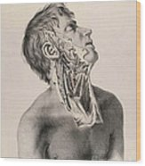 Historical Anatomical Illustration Wood Print
