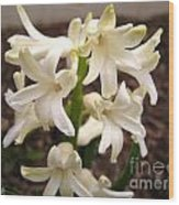 Hyacinth Named Aiolos Wood Print