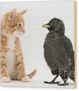 Jackdaw And Kitten Wood Print