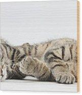 Kitten Companions Wood Print