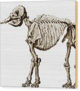 Mastodon Skeleton Wood Print by Science Source