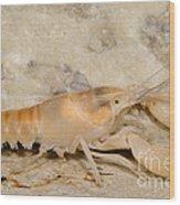 Miami Cave Crayfish Wood Print