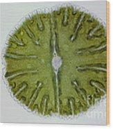 Micrasterias Sp. Algae Lm Wood Print