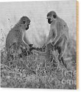 3 Monkeys Hey Its Not A Wig Wood Print