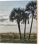 3 Palms On The Beach Wood Print