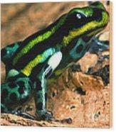 Pasco Poison Frog Wood Print
