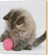 Playful Kitten Wood Print