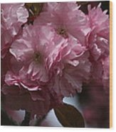 Precious Cherry Blossom Wood Print