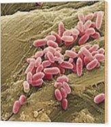 Pseudomonas Aeruginosa Bacteria, Sem Wood Print