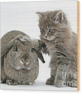 Rabbit And Kitten Wood Print
