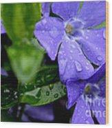 Raindrops On Sorcerers Violet Wood Print