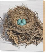 Robins Nest With Eggs Wood Print