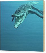 Saltwater Crocodile Crocodylus Porosus Wood Print by Mike Parry
