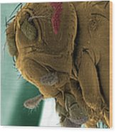 Sem Of A Mutant Fruit Fly Wood Print