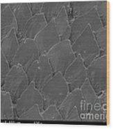 Shark Skin, Sem Wood Print