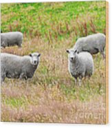 Sheeps Wood Print by MotHaiBaPhoto Prints
