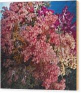 Soft Coral In Raja Ampat, Indonesia Wood Print