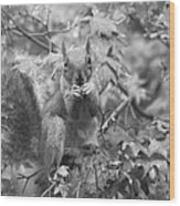 Squirrel Dinner Wood Print