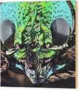 Sternocera Ruficonis Wood Print