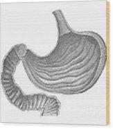 Stomach Wood Print