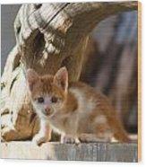 Sweet Cat Wood Print