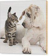 Tabby Kitten & Great Dane Pup Wood Print