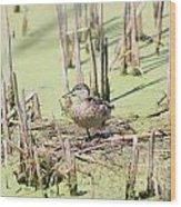 Teal Duck Wood Print