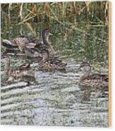 Teal Ducks Wood Print