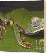 Tiger Stripe Monkey Frog Wood Print