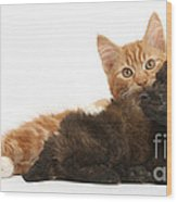 Toy Poodle Puppy With Kitten Wood Print