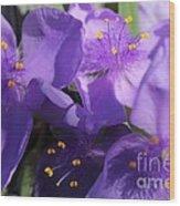 Tradescantia Named Andersonia Mauve Wood Print
