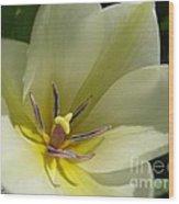 Tulip Named Perles De Printemp Wood Print
