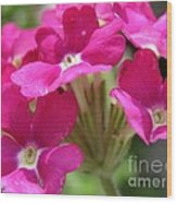 Verbena From The Ideal Florist Mix Wood Print