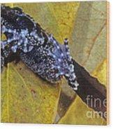 Vietnamese Moss Frog Wood Print