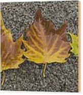 3 Wet Leaves Wood Print