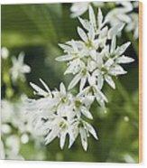 Wild Garlic (allium Ursinum) Wood Print