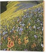 Wildflowers, California Wood Print