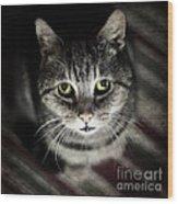 Wonky Eyed Tiger Wood Print