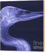 X-ray Of A Mallard Duck Head Wood Print