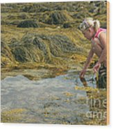 Young Girl Exploring A Maine Tidepool Wood Print