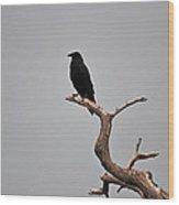 30- Black Crow Wood Print